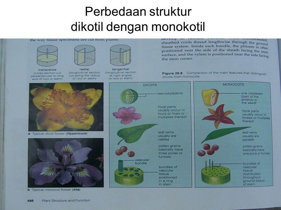Perbedaan struktur dikotil dengan monokotil