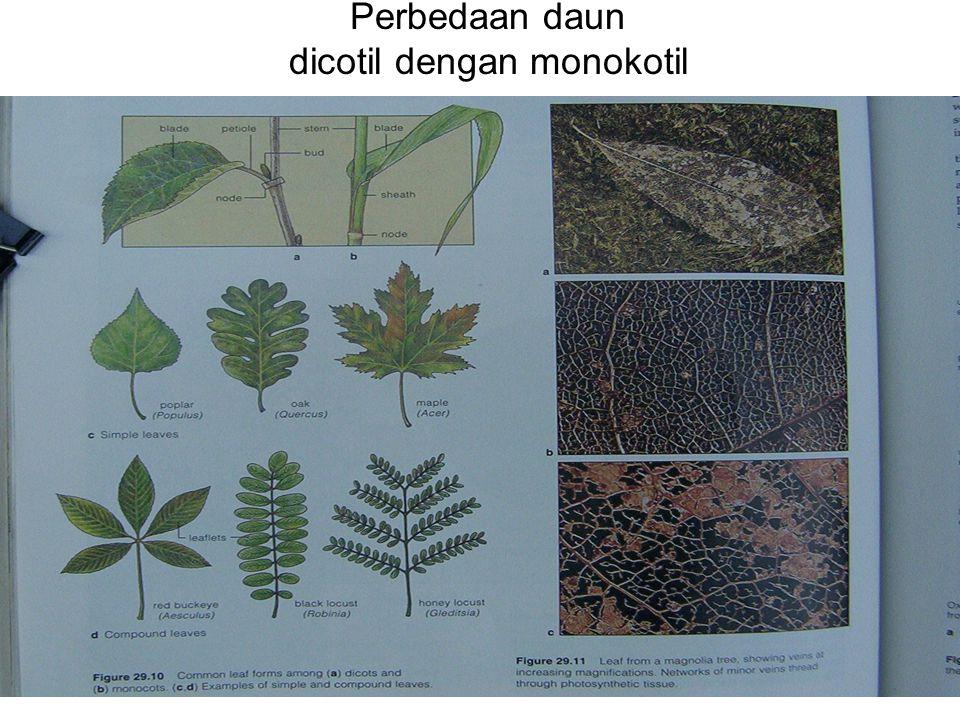Perbedaan daun dicotil dengan monokotil