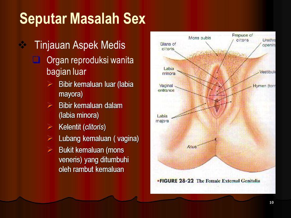 10 Seputar Masalah Sex  Tinjauan Aspek Medis  Organ reproduksi wanita bagian luar  Bibir kemaluan luar (labia mayora)  Bibir kemaluan dalam (labia