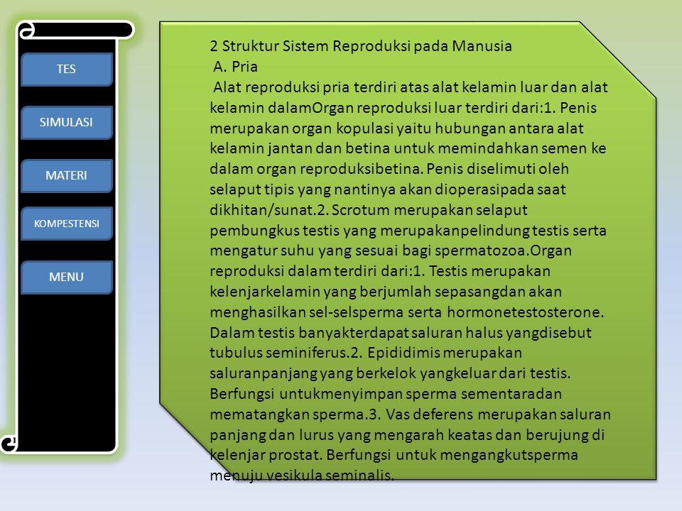 TES SIMULASI MATERI KOMPESTENSI MENU 2 Struktur Sistem Reproduksi pada Manusia A. Pria Alat reproduksi pria terdiri atas alat kelamin luar dan alat ke