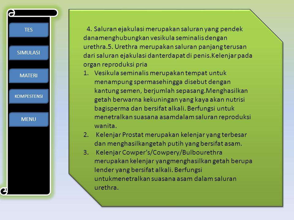 TES SIMULASI MATERI KOMPESTENSI MENU 4. Saluran ejakulasi merupakan saluran yang pendek danamenghubungkan vesikula seminalis dengan urethra.5. Urethra