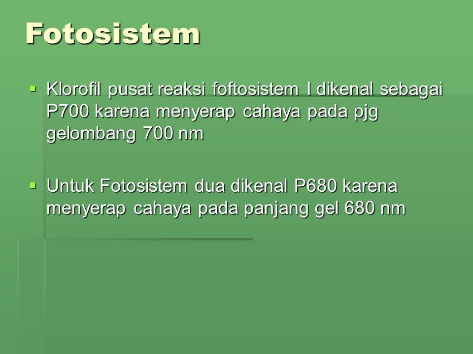  Klorofil pusat reaksi foftosistem I dikenal sebagai P700 karena menyerap cahaya pada pjg gelombang 700 nm  Untuk Fotosistem dua dikenal P680 karena