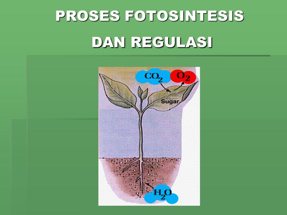 Gambar 1. Anatomi sel tumbuhan