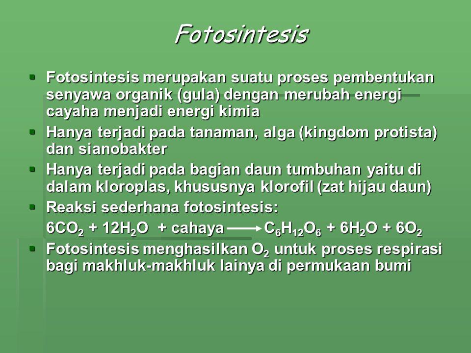 Fotosintesis  Fotosintesis merupakan suatu proses pembentukan senyawa organik (gula) dengan merubah energi cayaha menjadi energi kimia  Hanya terjad