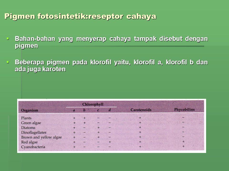 Perbandingan Struktur Daun Tanaman C 3 dan C 4