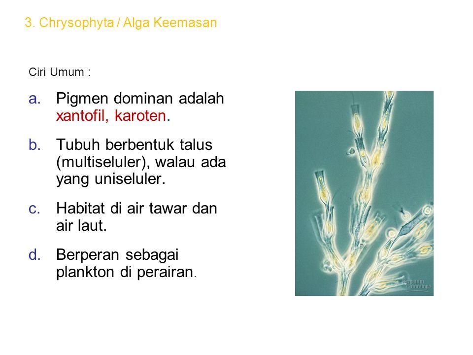 Ciri Umum : a.Pigmen dominan adalah xantofil, karoten. b.Tubuh berbentuk talus (multiseluler), walau ada yang uniseluler. c.Habitat di air tawar dan a