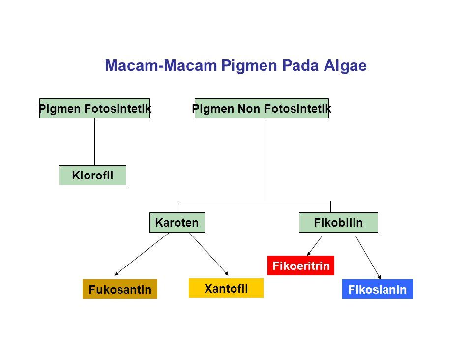 Macam-Macam Pigmen Pada Algae Pigmen FotosintetikPigmen Non Fotosintetik Klorofil Fukosantin Xantofil Fikoeritrin Fikosianin KarotenFikobilin