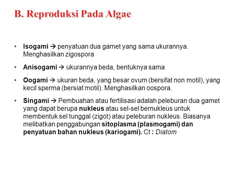 Siklus Reproduksi Codium The life cycle is: √ 1N2N anisogami zigot sporangium sporosit zoospora Sporofit 2 sexes meiosis