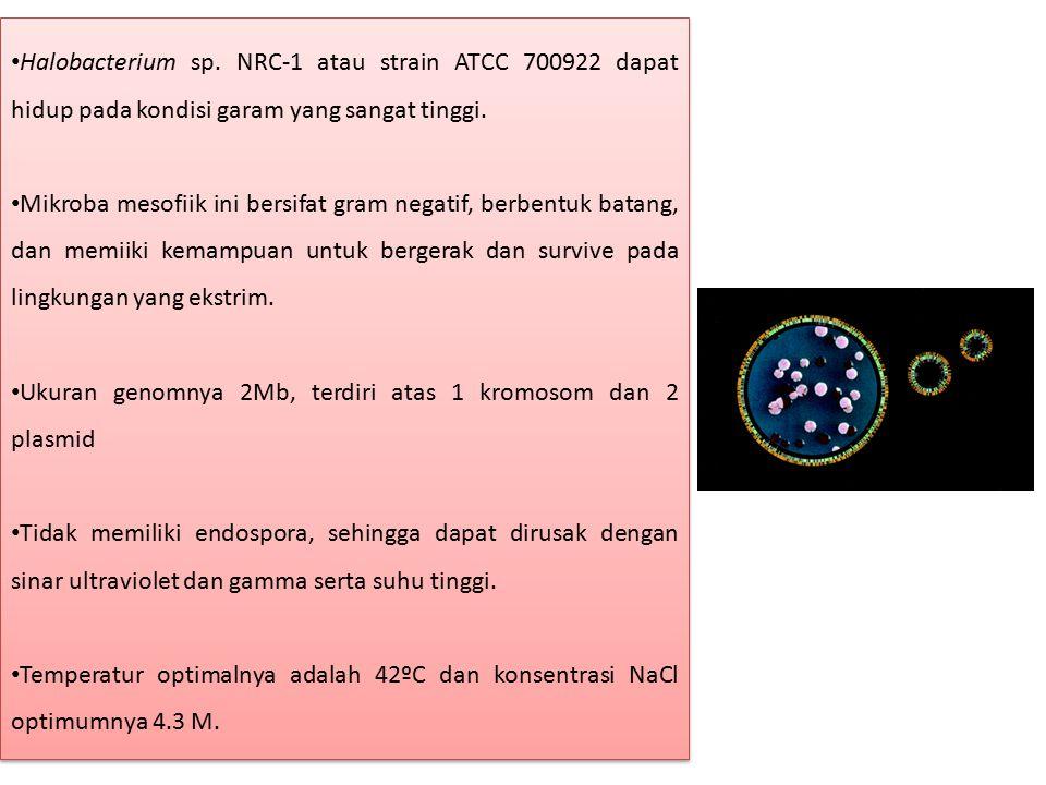 Halobacterium sp. NRC-1 atau strain ATCC 700922 dapat hidup pada kondisi garam yang sangat tinggi. Mikroba mesofiik ini bersifat gram negatif, berbent