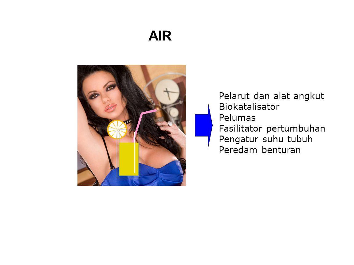 AIR Pelarut dan alat angkut Biokatalisator Pelumas Fasilitator pertumbuhan Pengatur suhu tubuh Peredam benturan