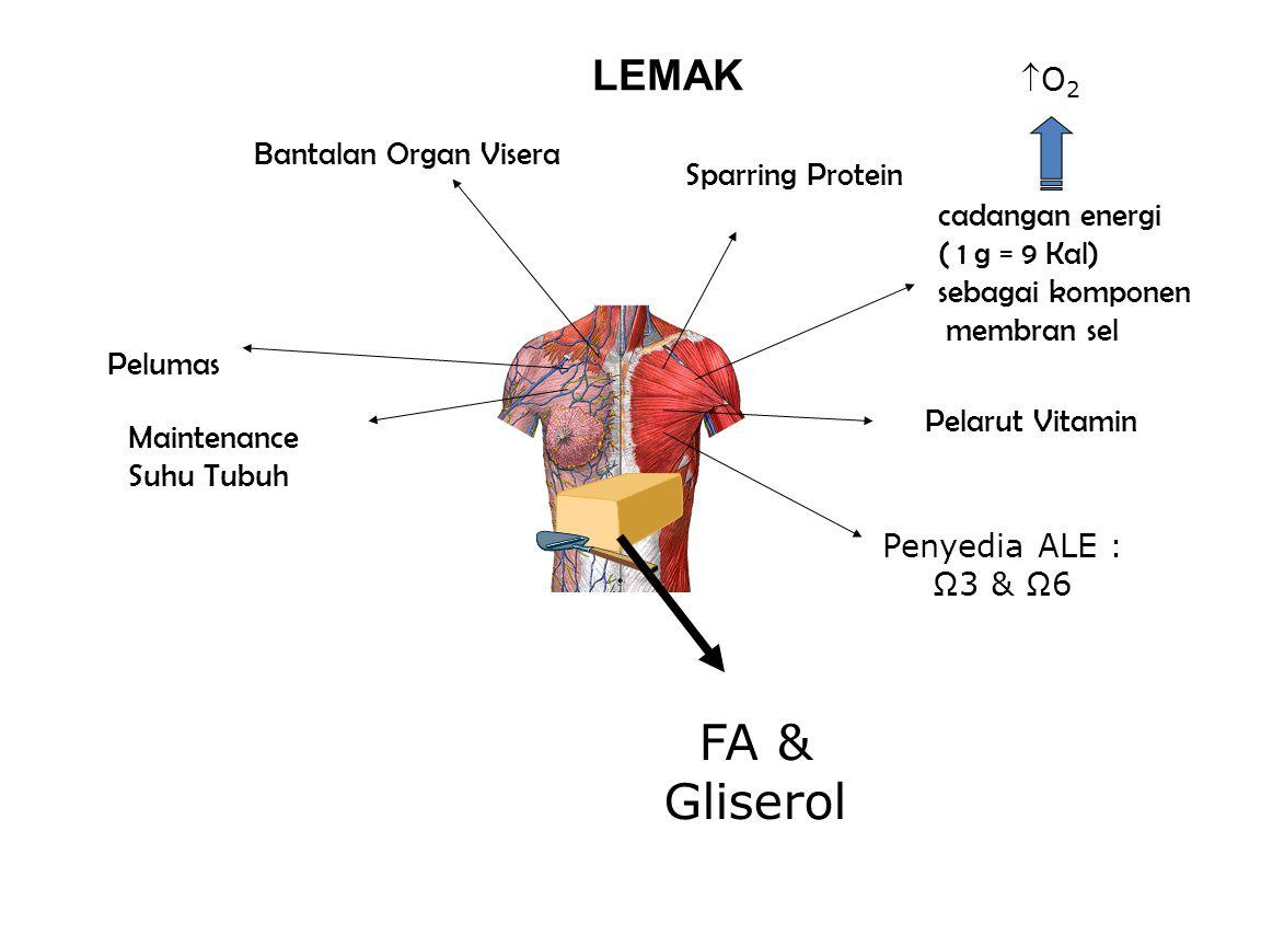 LEMAK cadangan energi ( 1 g = 9 Kal) sebagai komponen membran sel O2O2 FA & Gliserol Pelarut Vitamin Penyedia ALE : Ω3 & Ω6 Bantalan Organ Visera Sparring Protein Pelumas Maintenance Suhu Tubuh