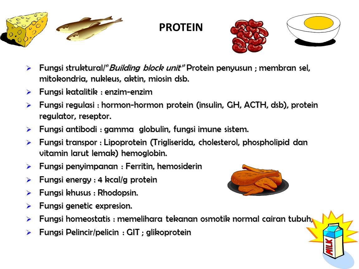PROTEIN  Fungsi struktural/ Building block unit Protein penyusun ; membran sel, mitokondria, nukleus, aktin, miosin dsb.