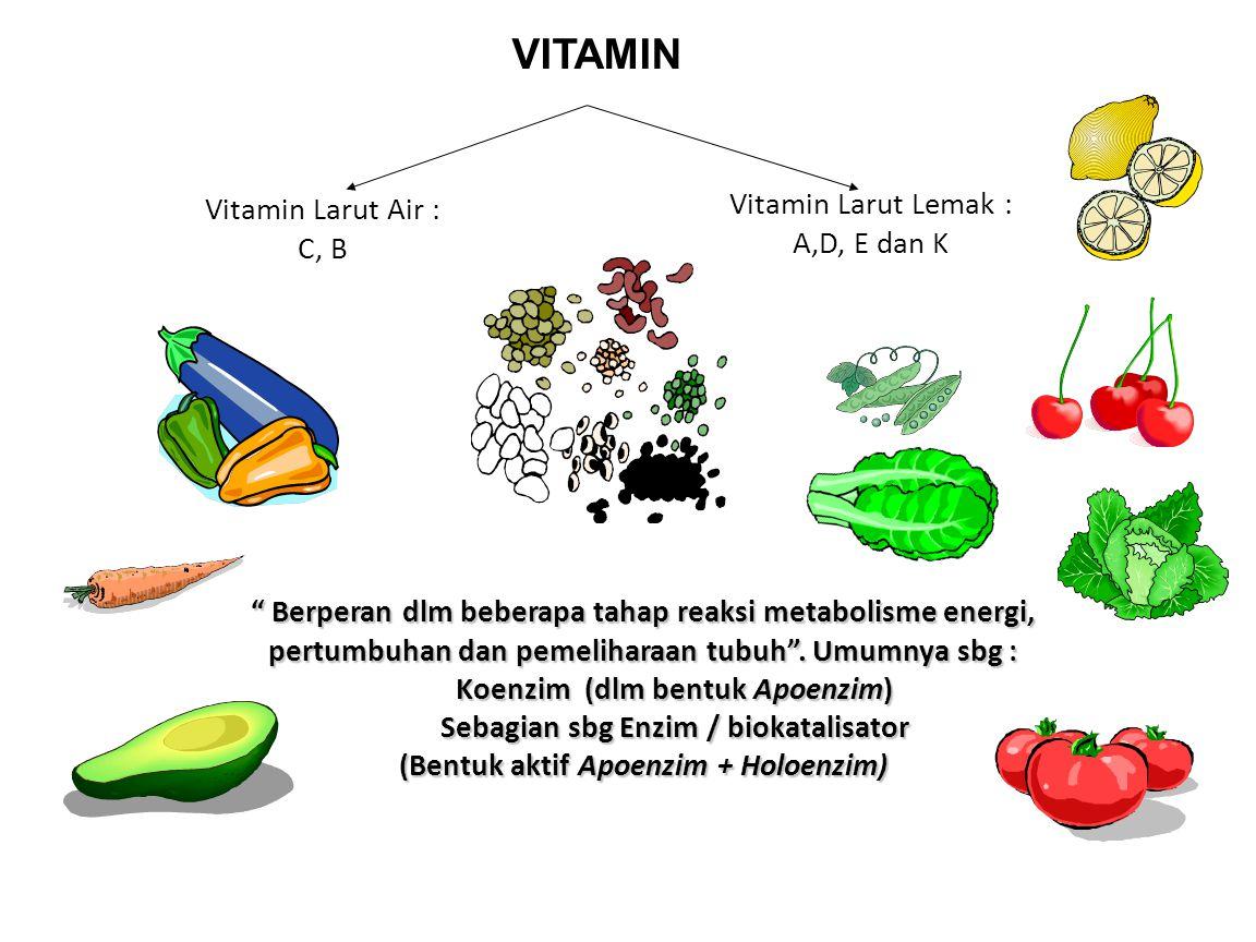 """VITAMIN """" Berperan dlm beberapa tahap reaksi metabolisme energi, pertumbuhan dan pemeliharaan tubuh"""". Umumnya sbg : Koenzim (dlm bentuk Apoenzim) Seba"""
