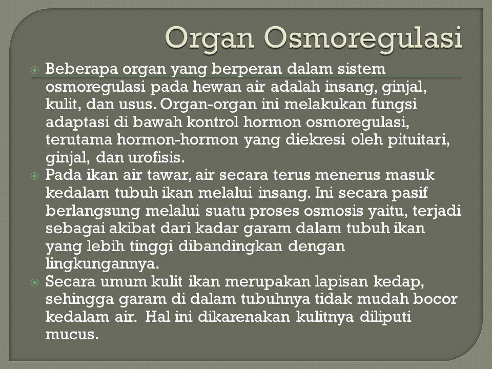  Beberapa organ yang berperan dalam sistem osmoregulasi pada hewan air adalah insang, ginjal, kulit, dan usus. Organ-organ ini melakukan fungsi adapt