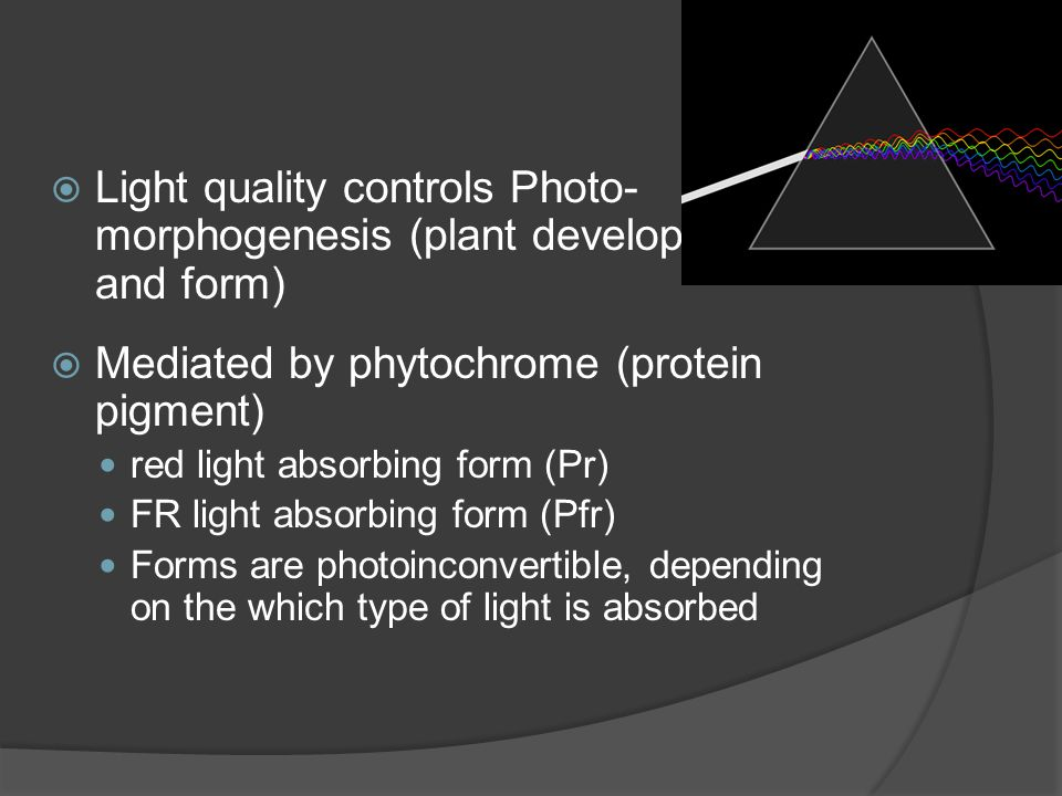  Light quality controls Photo- morphogenesis (plant development and form)  Mediated by phytochrome (protein pigment) red light absorbing form (Pr) F