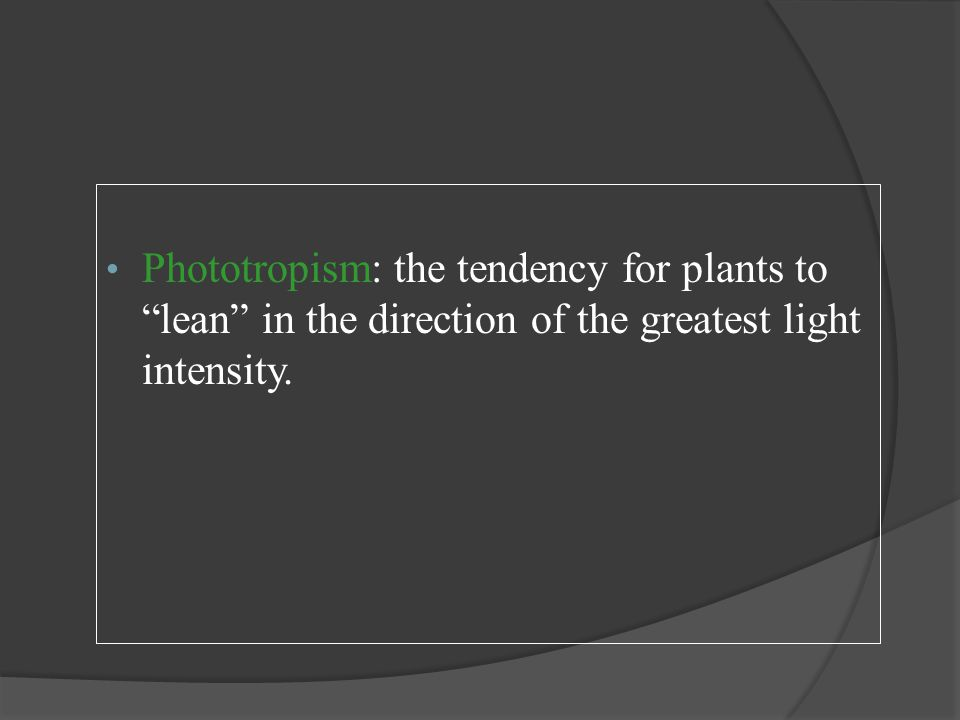 "Phototropism: the tendency for plants to ""lean"" in the direction of the greatest light intensity."