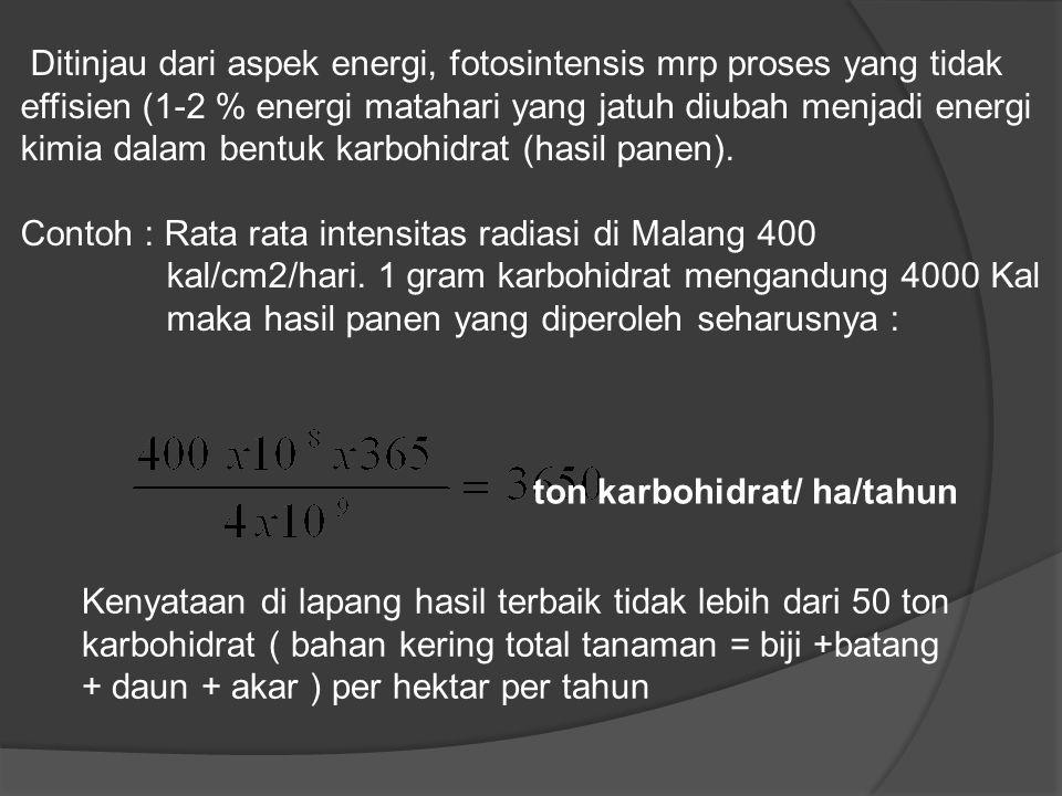 ton karbohidrat/ ha/tahun Ditinjau dari aspek energi, fotosintensis mrp proses yang tidak effisien (1-2 % energi matahari yang jatuh diubah menjadi en