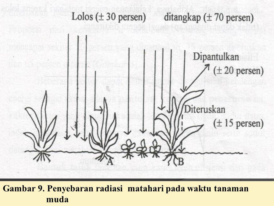 Gambar 9. Penyebaran radiasi matahari pada waktu tanaman muda