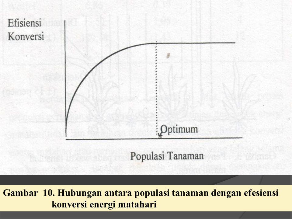 Gambar 10. Hubungan antara populasi tanaman dengan efesiensi konversi energi matahari