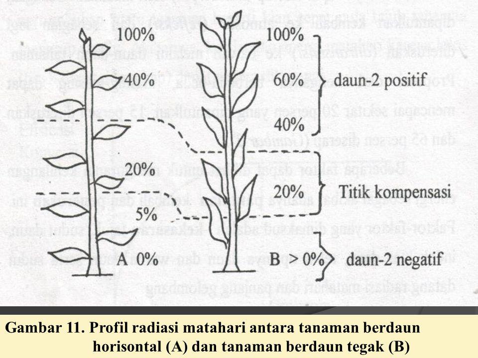 Gambar 11. Profil radiasi matahari antara tanaman berdaun horisontal (A) dan tanaman berdaun tegak (B)