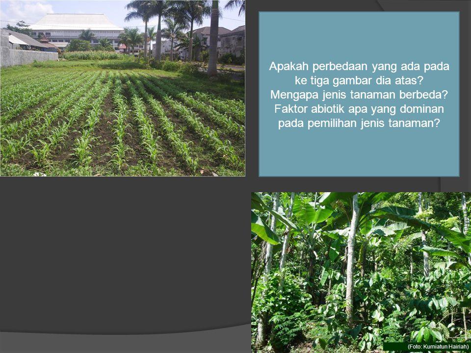 Apakah perbedaan yang ada pada ke tiga gambar dia atas? Mengapa jenis tanaman berbeda? Faktor abiotik apa yang dominan pada pemilihan jenis tanaman?