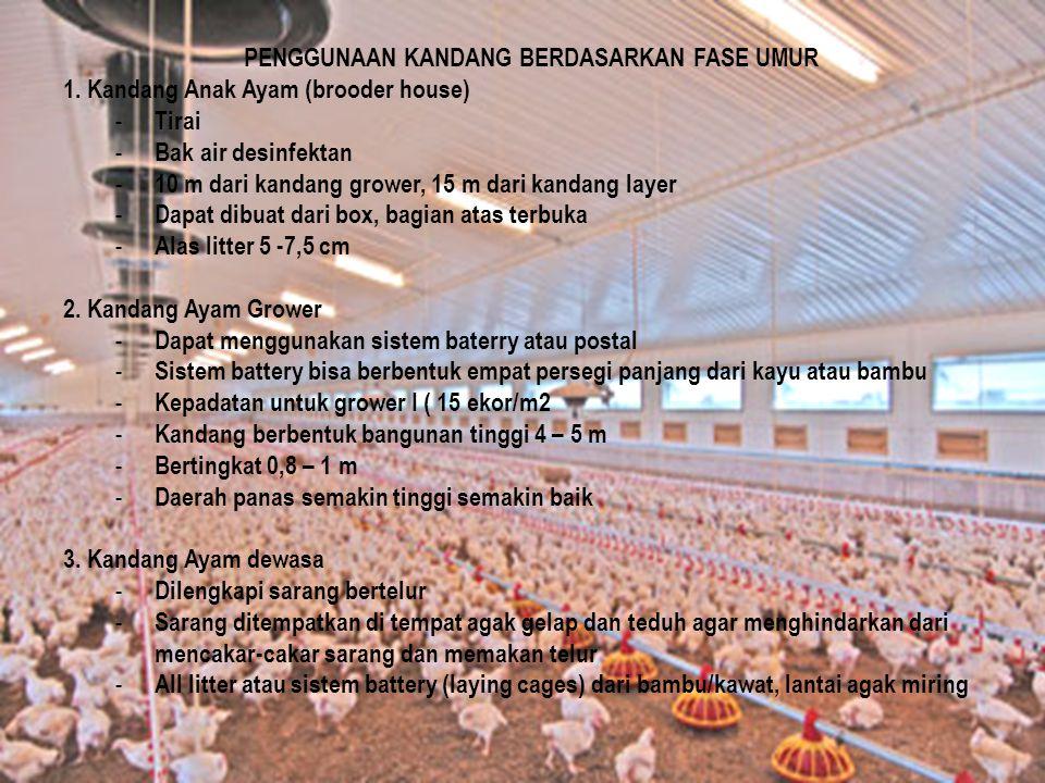 PENGGUNAAN KANDANG BERDASARKAN FASE UMUR 1. Kandang Anak Ayam (brooder house) - Tirai - Bak air desinfektan - 10 m dari kandang grower, 15 m dari kand