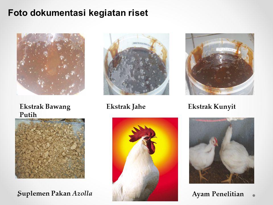 Foto dokumentasi kegiatan riset Ekstrak Bawang Putih Ekstrak JaheEkstrak Kunyit Suplemen Pakan Azolla Ayam Penelitian