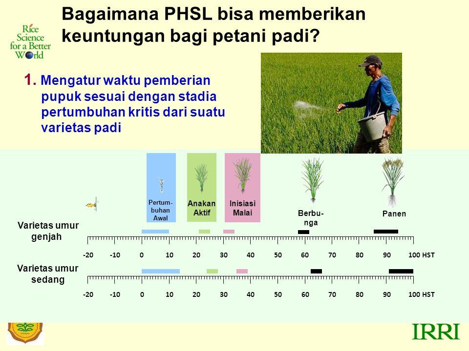 Bagaimana PHSL bisa memberikan keuntungan bagi petani padi.