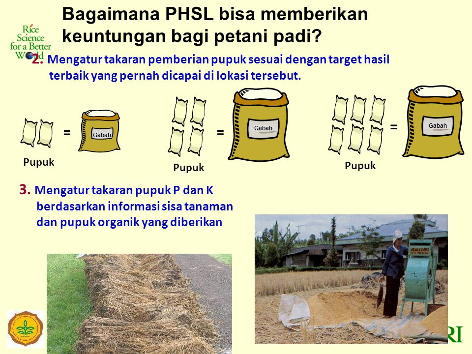 Internet version of PHSL Padi Sawah launched in Indonesia in January 2011