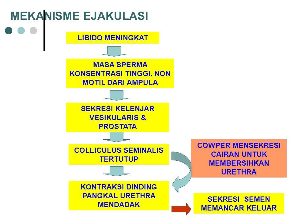 MEKANISME EJAKULASI LIBIDO MENINGKAT MASA SPERMA KONSENTRASI TINGGI, NON MOTIL DARI AMPULA SEKRESI KELENJAR VESIKULARIS & PROSTATA COLLICULUS SEMINALIS TERTUTUP KONTRAKSI DINDING PANGKAL URETHRA MENDADAK SEKRESI SEMEN MEMANCAR KELUAR COWPER MENSEKRESI CAIRAN UNTUK MEMBERSIHKAN URETHRA
