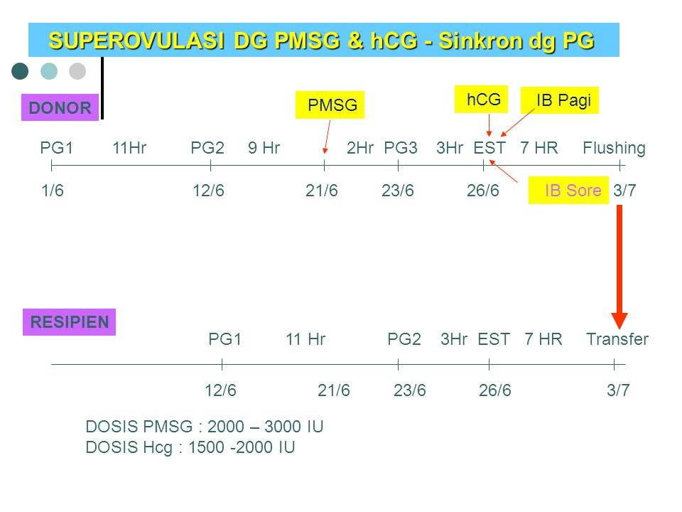 DONOR RESIPIEN PG1 11Hr PG2 9 Hr 2Hr PG3 3Hr EST 7 HR Flushing PMSG PG1 11 Hr PG2 3Hr EST 7 HR Transfer hCG IB Pagi IB Sore 1/6 12/6 21/6 23/6 26/6 3/7 SUPEROVULASI DG PMSG & hCG - Sinkron dg PG SUPEROVULASI DG PMSG & hCG - Sinkron dg PG DOSIS PMSG : 2000 – 3000 IU DOSIS Hcg : 1500 -2000 IU 12/6 21/6 23/6 26/6 3/7