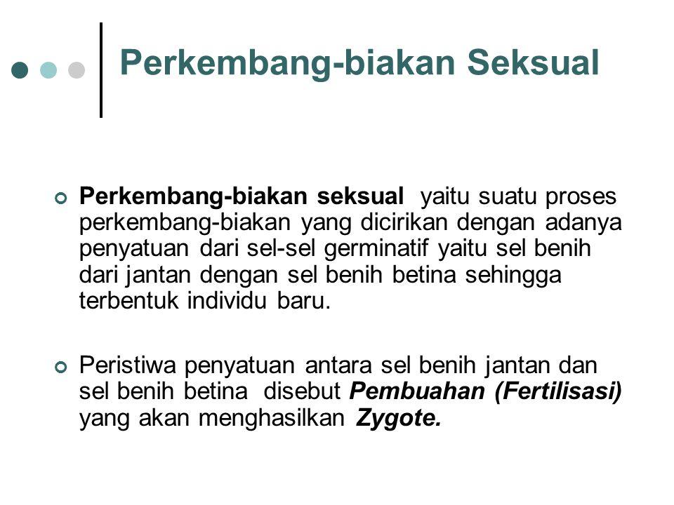 External fertilization Internal fertilization Fertilisasi dibedakan atas :