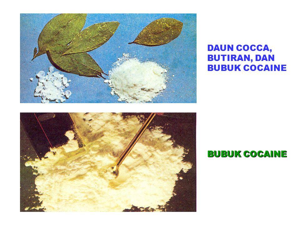 DAUN COCCA, BUTIRAN, DAN BUBUK COCAINE BUBUK COCAINE