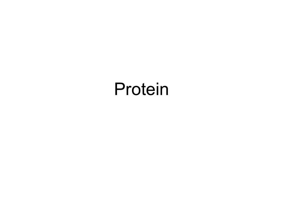 Polimer dengan monomer berupa asam amino Asam amino: –L-  -amino