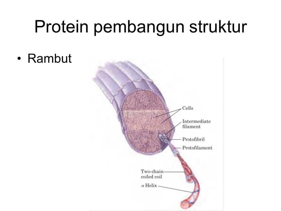 Protein pembangun struktur Rambut