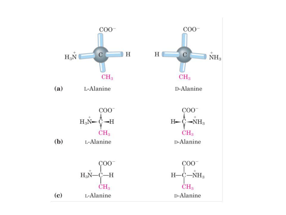 Penggolongan asam amino 20 asam amino utama penyusun protein Dibagi berdasar sifat gugus R: 1.Asam amino dengan gugus R non polar alifatik 2.Asam amino dengan gugus R polar tak bermuatan 3.Asam amino dengan gugus R polar bermuatan negatif (asam) 4.Asam amino dengan gugus R polar bermuatan positif (basa) 5.5Asam amino dengan gugus R aromatis