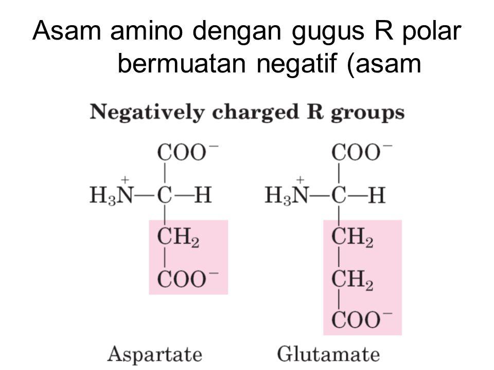 Struktur Protein Struktur Primer –Urutan asam amino Struktur Sekunder –  -helix atau  sheet karena ikatan hidrogen antar gugus -CO- dan -NH-pada polipetida Struktur Tersier –Struktur polipeptida karena interaksi antara gugus R (kovalen: jembatan S-S, dan interkasi lemah: hidrogen, elektronik, interaksi dipole, vander waals) Struktur Kuartener –Struktur karena interaksi antara polipeptida satu dengan yang lain
