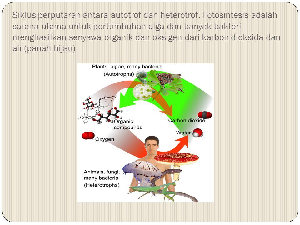 2.Kebanyakan mikroorganisme dapat dikategorikan sebagai salah satu dari empat tipe utama pemanfaatan nutrisi tergantung pada sumber karbon, energi dan elektron: a.Photolithotrophic autotrophs b.Chemoorganotrophic heterotrophs c.Photoorganotrophic heterotrophs d.Chemolithotrophic autotrophs 3.Beberapa organisme menunjukkan fleksibilitas besar matabolis dan setelah pola metabolis mereka merespon perubahan lingkungan; organisme mixotrophic meggabungkan proses metabolis autotrophic dan heterotrophic, mengandalkan pada sumber energi anorganik dan sumber karbon organik Kompetensi 5: Menyebutkan Tipe Bakteri Berdasarkan Kebutuhan Nutrisinya