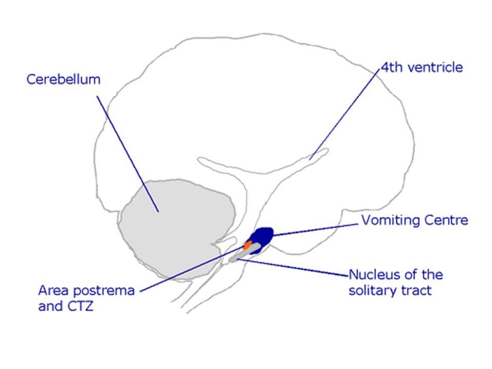 Ketika pusat muntah (VC) distimulasi, maka motor dari cascade akan bereaksi menyebabkan muntah.