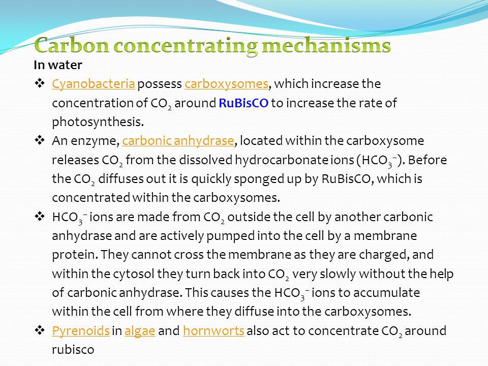 In water  Cyanobacteria possess carboxysomes, which increase the concentration of CO 2 around RuBisCO to increase the rate of photosynthesis.
