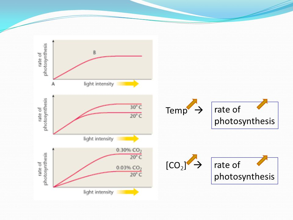 Temp  rate of photosynthesis [CO 2 ]  rate of photosynthesis