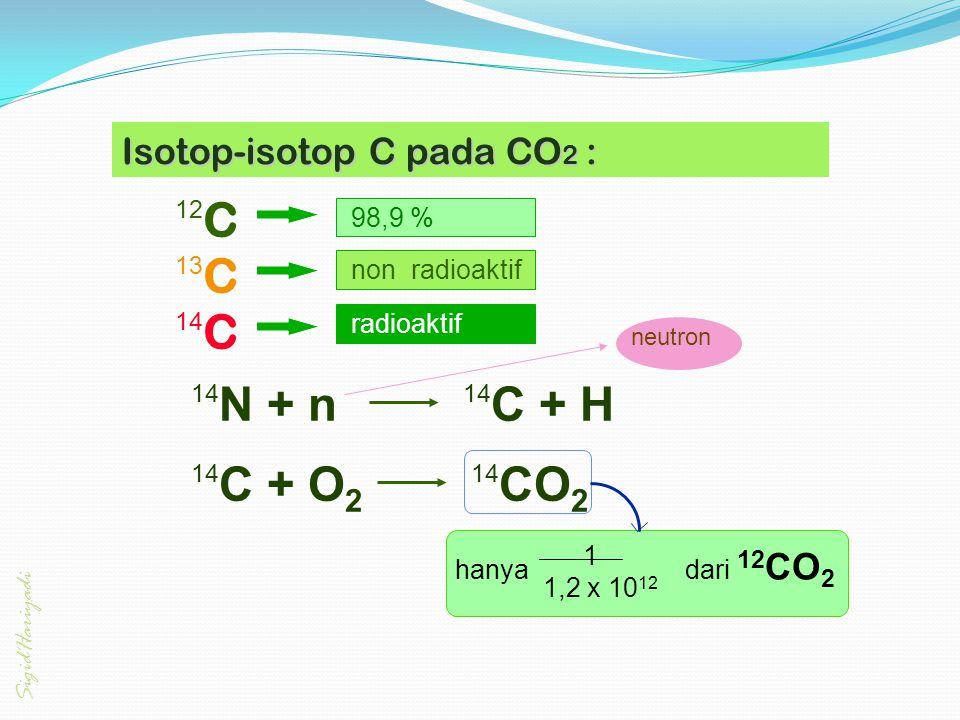 12 C 13 C 14 C radioaktif non radioaktif 98,9 % 14 N + n 14 C + H 14 C + O 2 14 CO 2 hanya dari 12 CO 2 _______ 1,2 x 10 12 1 neutron Isotop-isotop C
