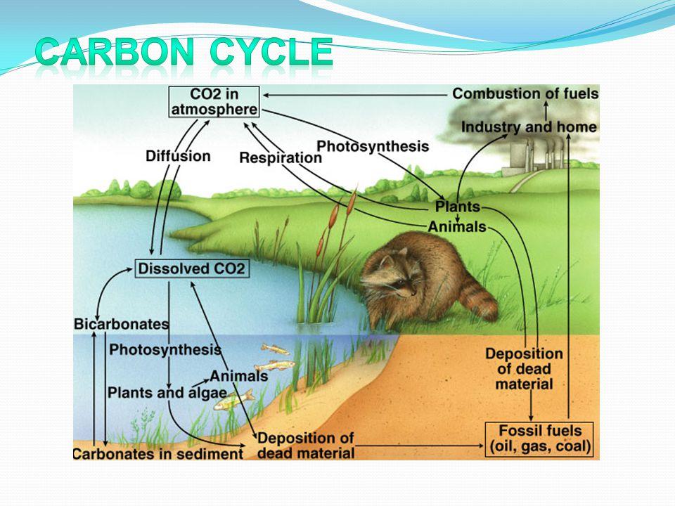 Kelarutan CO 2 dalam air murni pada berbagai temperatur CO 2 berupa gas, di atmosfer : 0,027- 0,044 % (0,033%), tetapi kelarutannya tinggi : 1194 ml/L