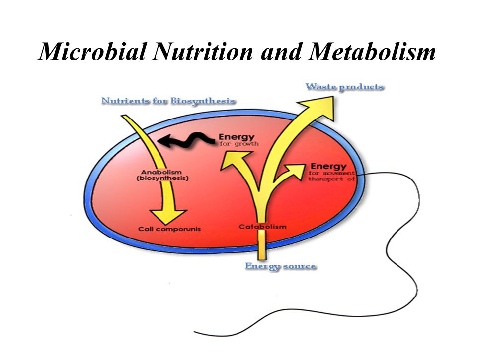 Microbial Nutrition and Metabolism
