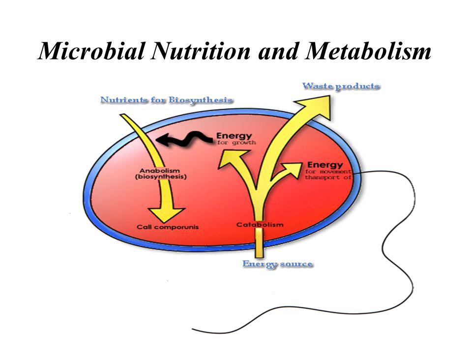 Nutrisi & Tipe Nutrisi Mikrobia Nutrien: sumber energi & komponen sel Nutrisi Mikrobia: Tipe nutrisi mikrobia Transportasi nutrient Pertumbuhan populasi mikrobia: Batch culture: fase pertumbuhan Continuous culture: chemostat Metode pengukuran pertumbuhan