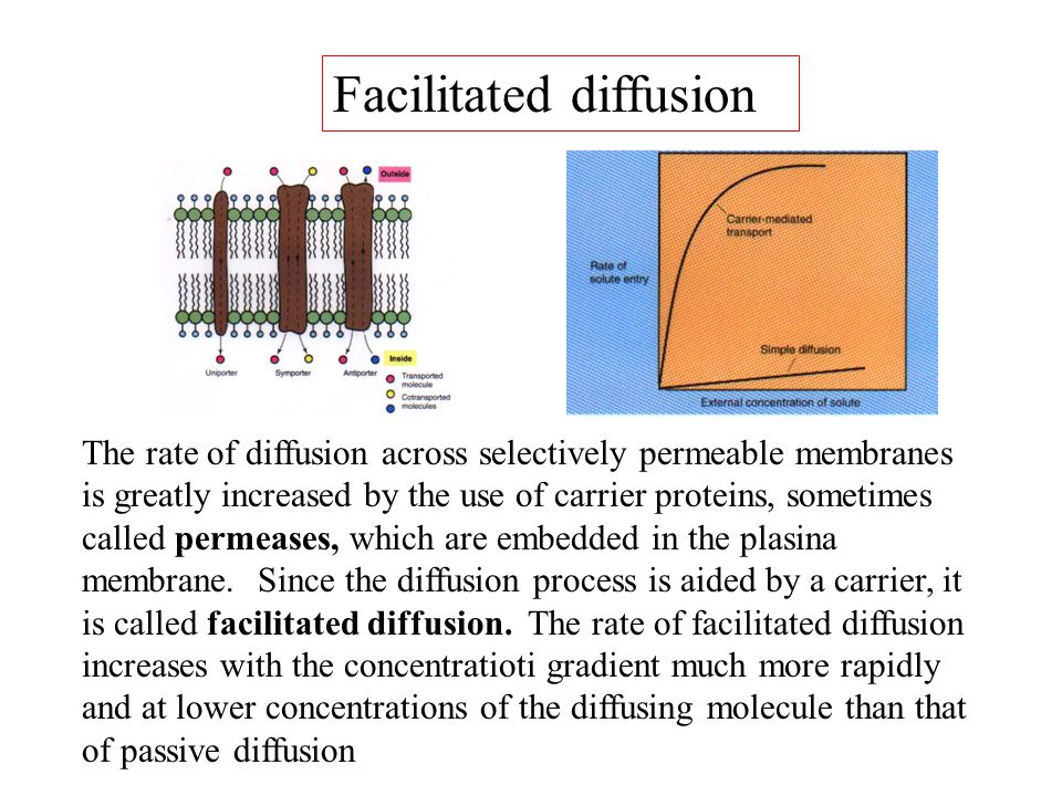 The rate of diffusion across selectively permeable membranes is greatly increased by the use of carrier proteins, sometimes called permeases, which ar