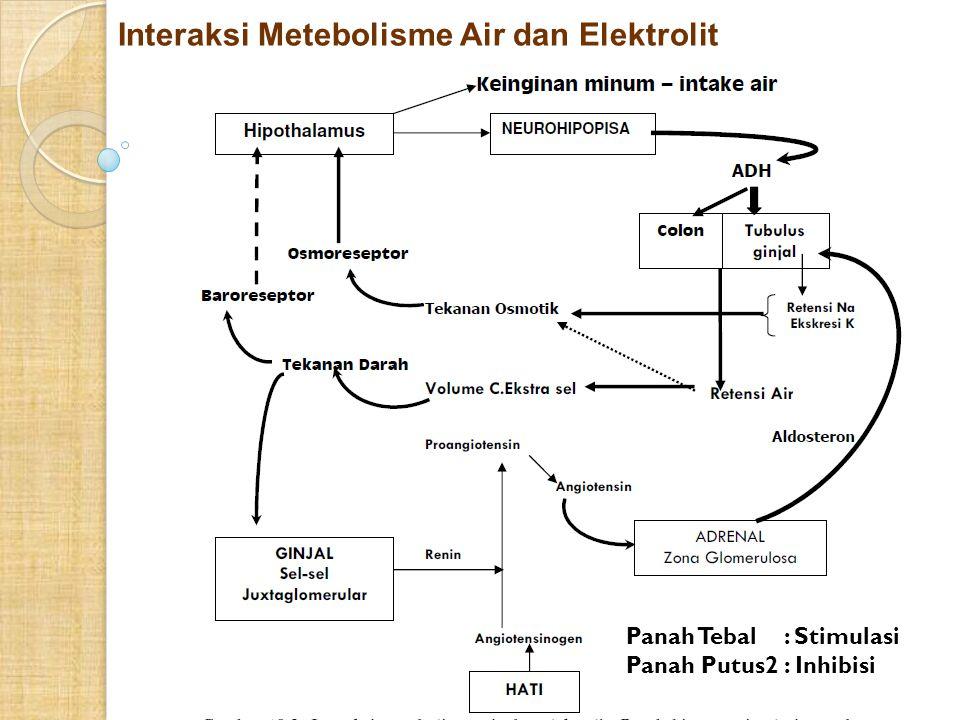 Interaksi Metebolisme Air dan Elektrolit Panah Tebal : Stimulasi Panah Putus2 : Inhibisi