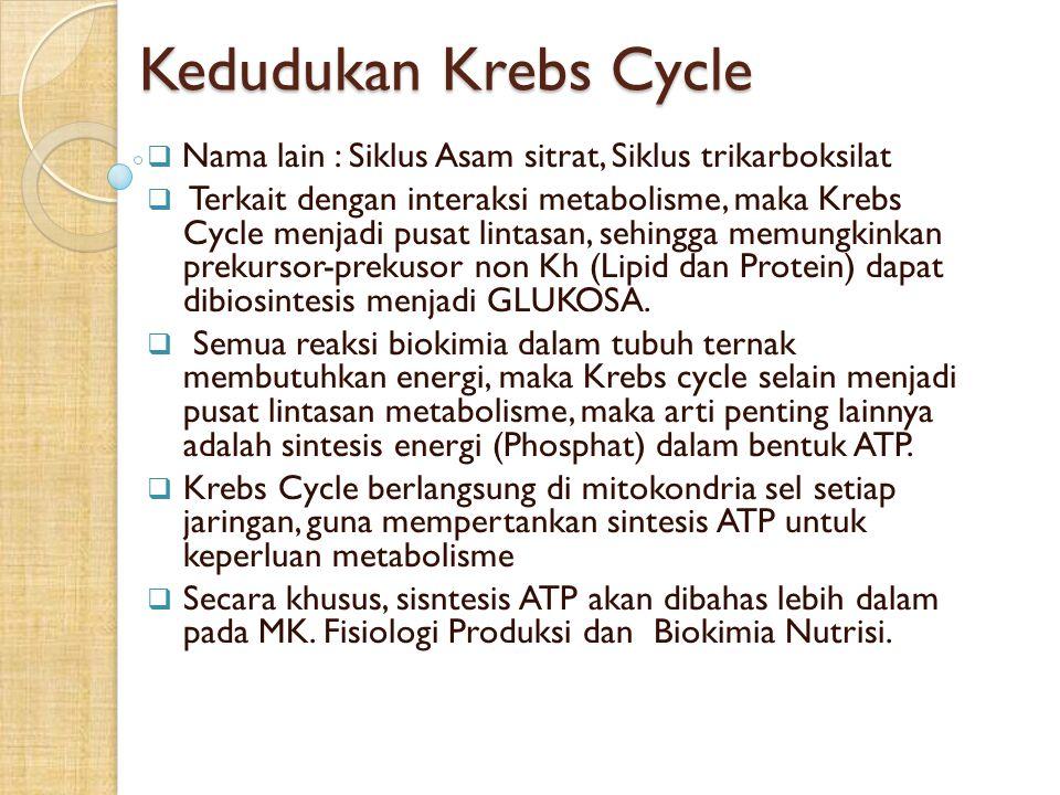 Kedudukan Krebs Cycle  Nama lain : Siklus Asam sitrat, Siklus trikarboksilat  Terkait dengan interaksi metabolisme, maka Krebs Cycle menjadi pusat l
