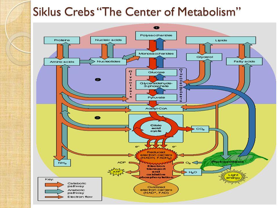 Interaksi Lipogenic dengan Metabolisme KH dan Protein serta Interaksi Jaringan yang Terlibat
