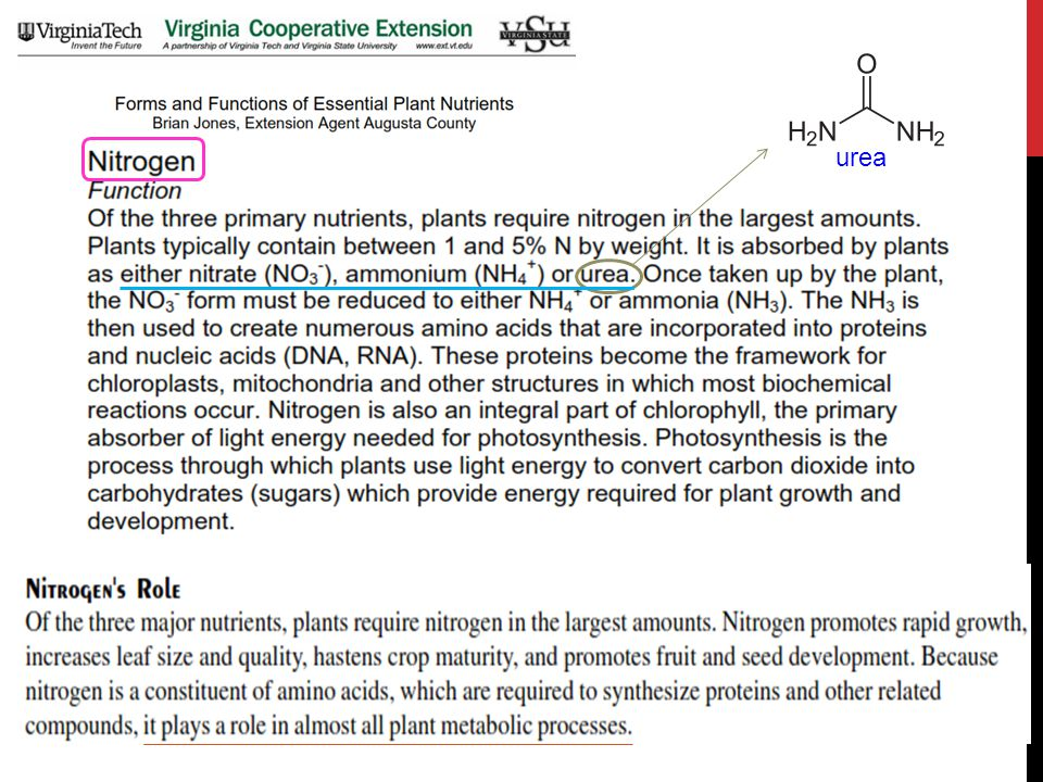 bakteri tertentu blue-green algae N2N2 NO 3  NH 4 +